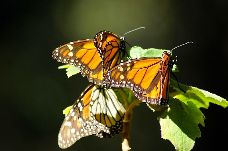 Butterfly sanctuary 001 copy 2