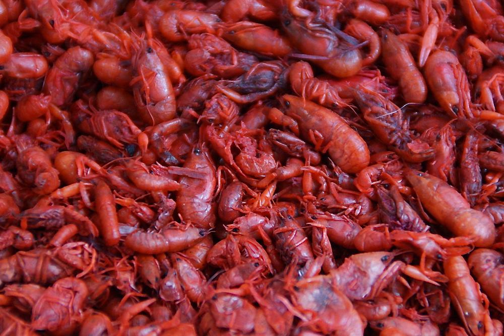 Eating insects at San Juan Market 018