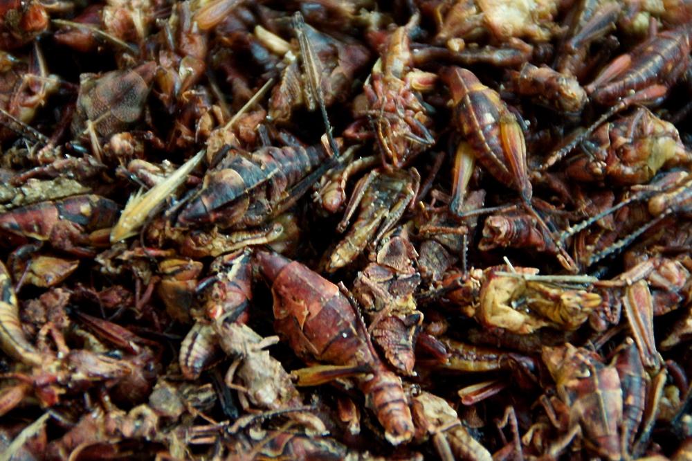 Eating insects at San Juan Market