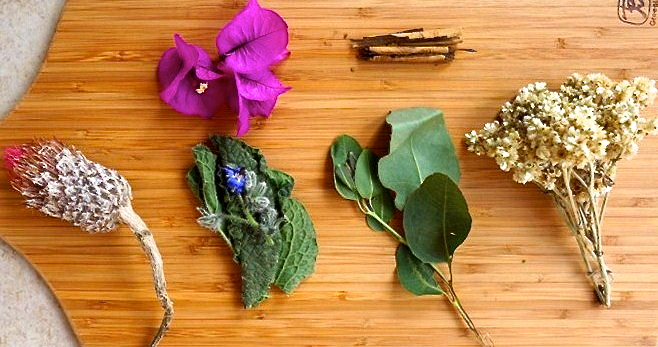 Mexican indigenous herbal tea to purify lungs & fight cough