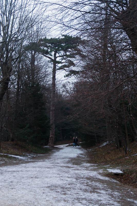 DSC03197 Winter Landscapes in Vienna