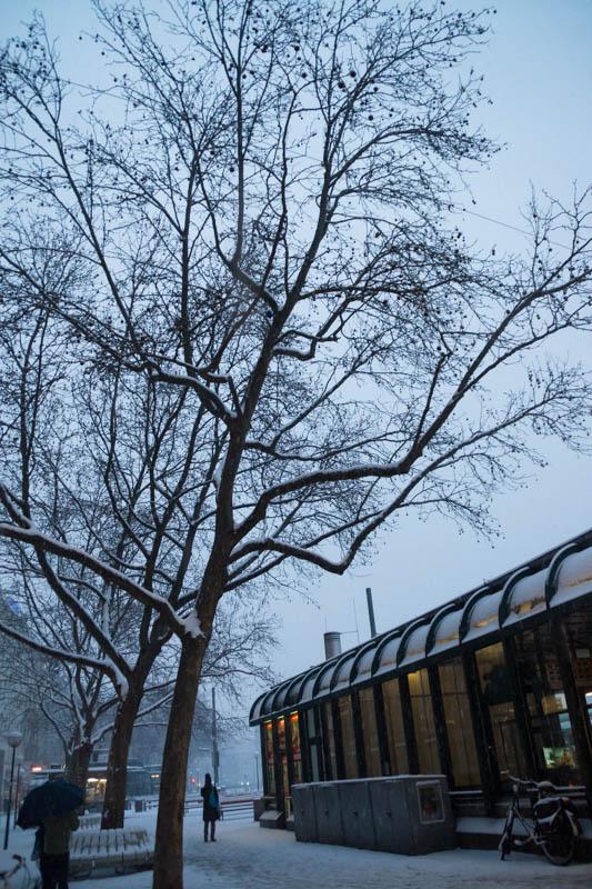 DSC03564 Winter Landscapes in Vienna