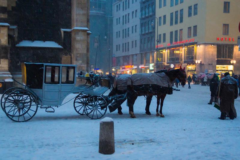 DSC03585 Winter Landscapes in Vienna