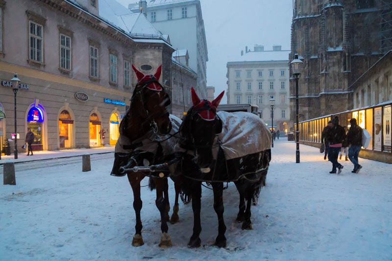 DSC03587 Winter Landscapes in Vienna