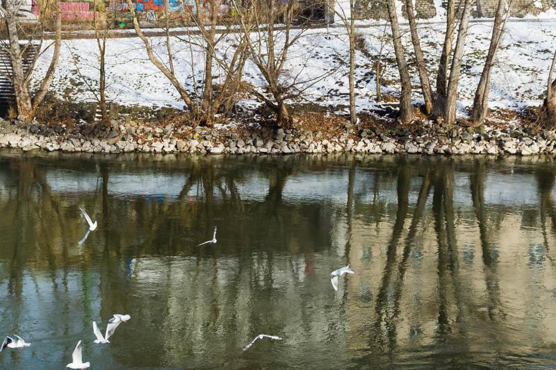 DSC03675 Winter Landscapes in Vienna